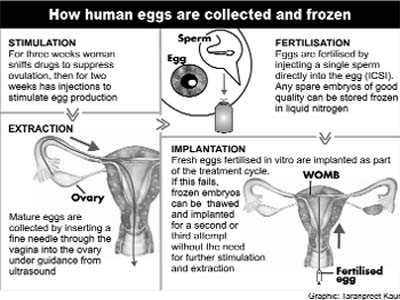 Frozen embryos as good as fresh ones for sucessful IVF births