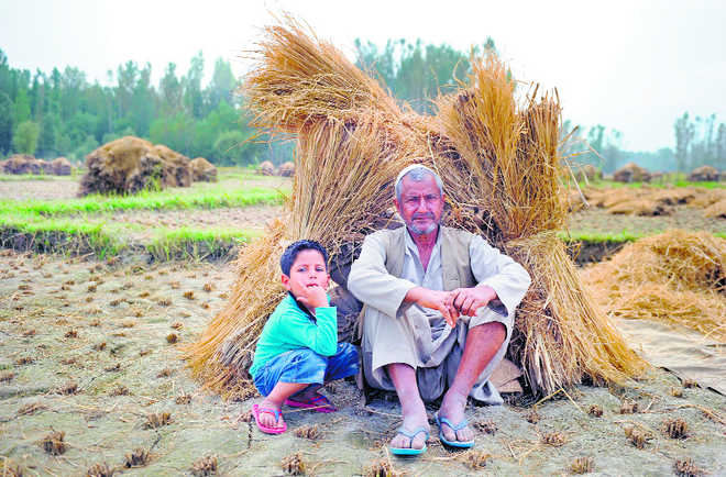 Will the Budget stimulate farmers' income?