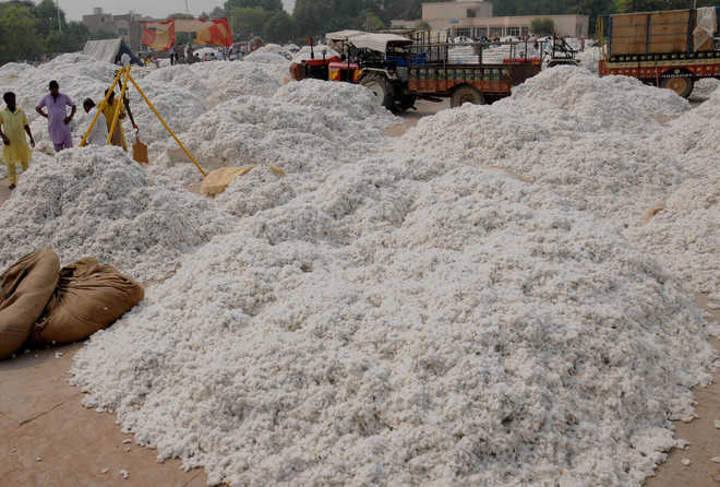 Cotton production falls short of initial estimate