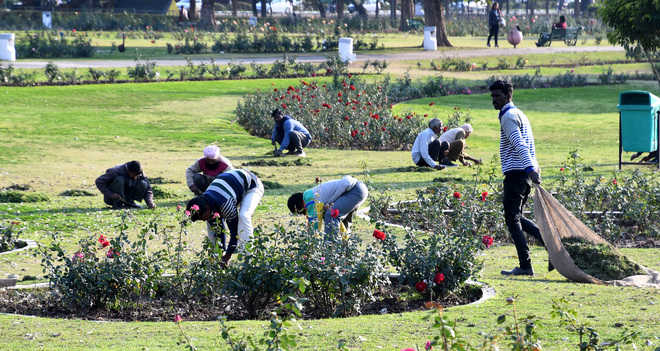 829 rose varieties to spread fragrance