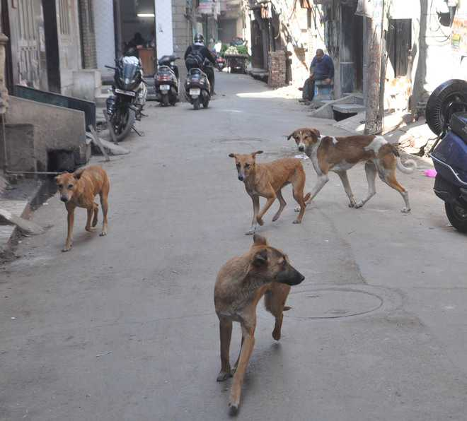 Mauled by stray dogs, 10-year-old succumbs