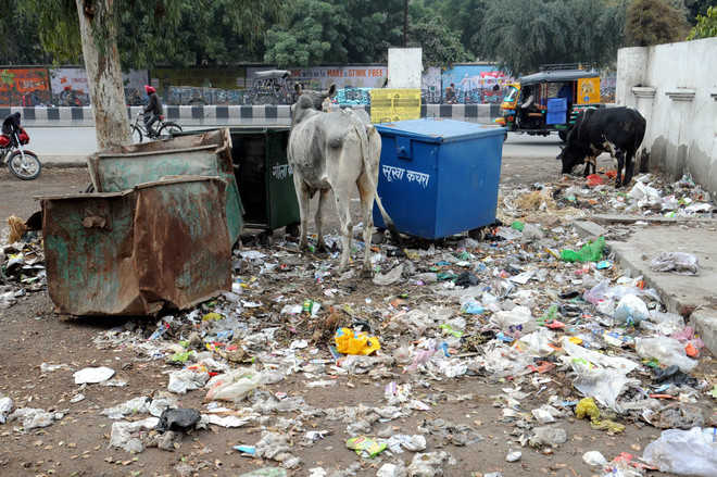 Swachhta Survey over, city stinks again