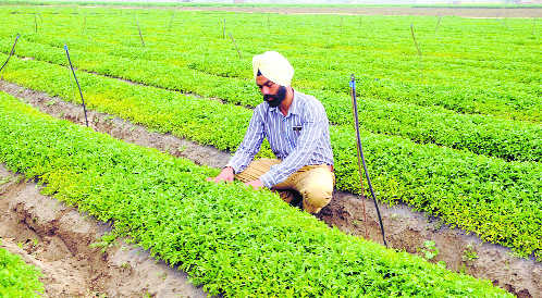 Vegetable nursery gains ground for farmers