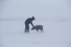 A herder of the agricultural cooperative organisation 'Erv' pets a reindeer at a reindeer camping ground, about 250 km north of Naryan-Mar, in Nenets Autonomous District, Russia, March 8. Reuters