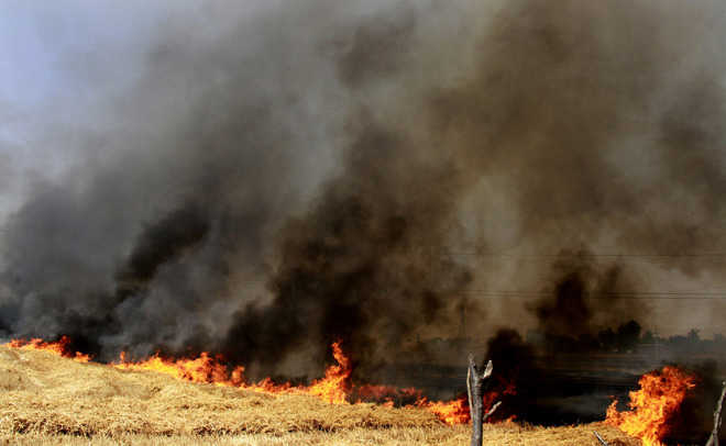 Fire destroys standing wheat crop on 15 acres