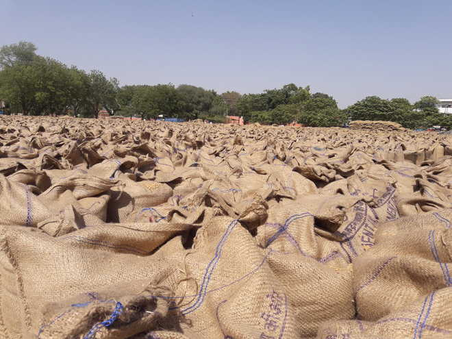 Tardy lifting leads to wheat glut in mandis
