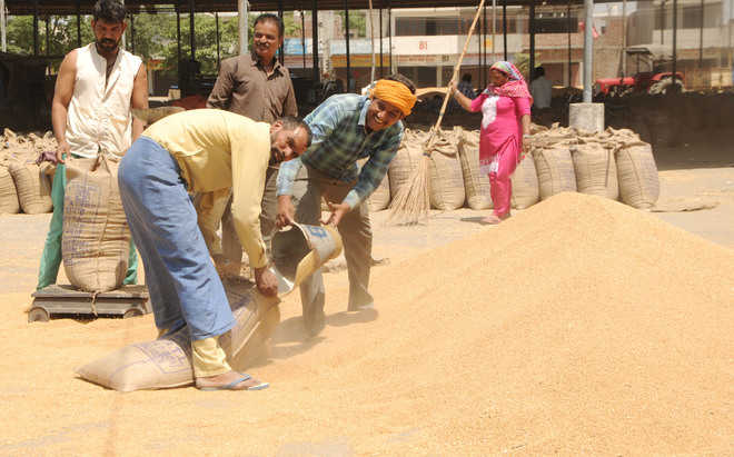 DC for lifting of wheat at fast pace