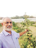 Apples in Hoshiarpur? These farmers have made it possible