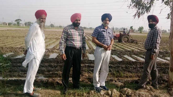 Agri officials destroy paddy transplanted on one acre