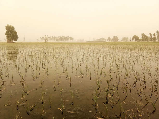 Despite order, paddy sowing goes on