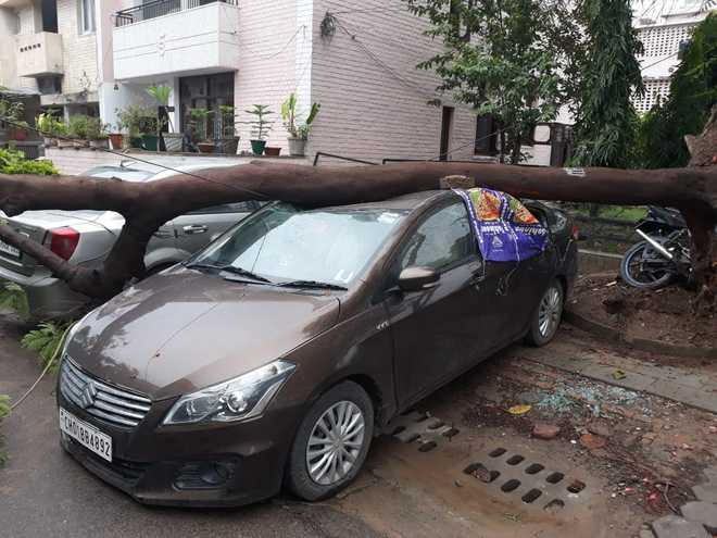 66 mm rain in 24 hrs; trees uprooted