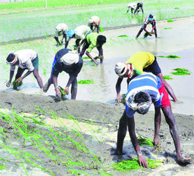 Ready to give 8-hour uninterrupted power to paddy farmers: Official