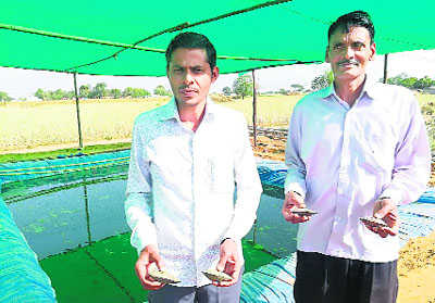 Gurugram first in state to promote pearl, shrimp farming