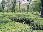 Palampur faces serious threat to ecosystem