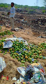Chemical-laced fruit destroyed, none punished