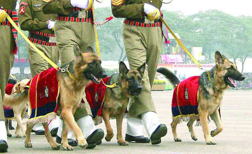 30 ITBP dog teams deputed for Obama's security