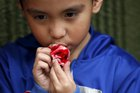 Logan Rios, 5, eats a bloody ear made of gummy candy and red jelly at the Zombie Gourmet homemade candy manufacturer on the outskirts of Mexico City on October 30, 2015. A candy maker in Mexico is raising the stakes this Halloween when it comes to spooky with chewable candy ears and an edible candy foetus for the ultimate prankster. Joyce Martias set up her business,