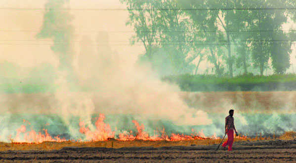 No end to smog, but PPCB claims decline in stubble burning