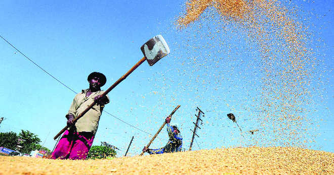 Paddy yield per hectare up 8%, record production expected