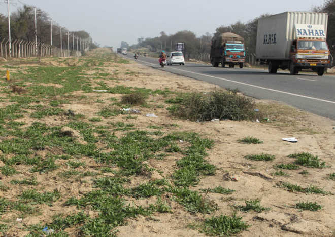 36,905 trees to be axed for road projects