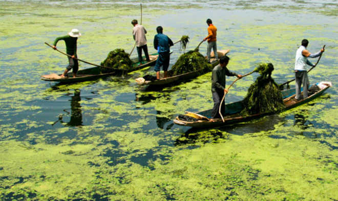 The world famous Dal Lake dying a slow death