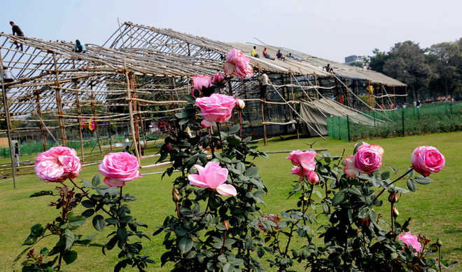 Rose Festival to focus on national integration