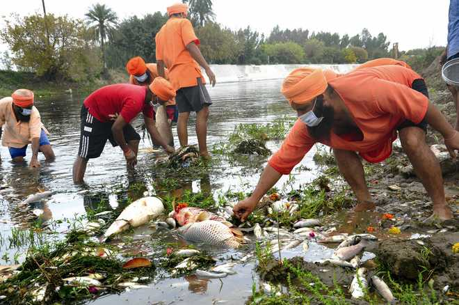 Finally, admn begins aeration of Kali Bein to save dying fish