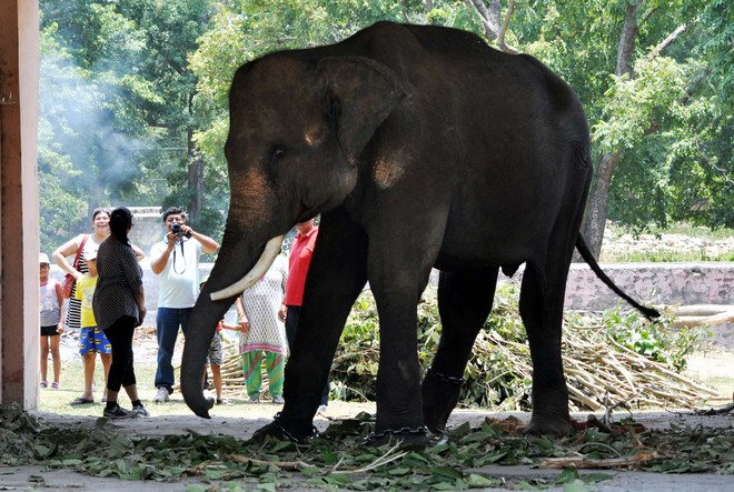 Rajaji Park to host elephant safari after eight years