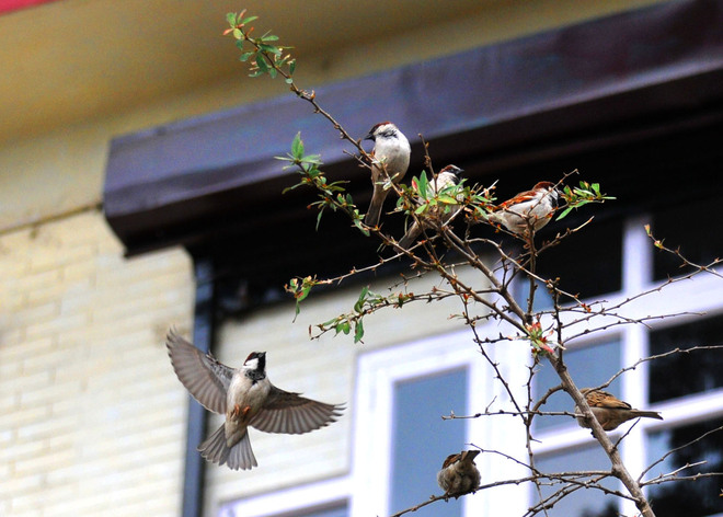 Forest Dept, NGO out to save vanishing house sparrows