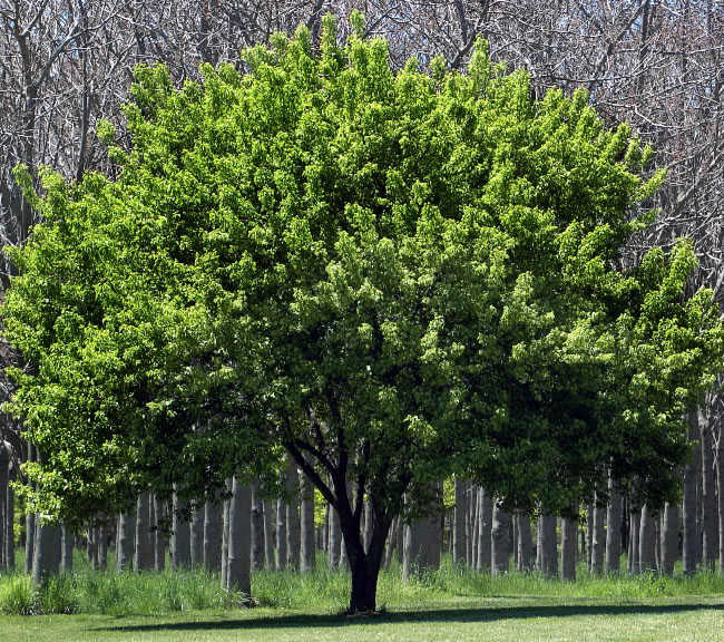 Himachal sells first carbon credits through plantations