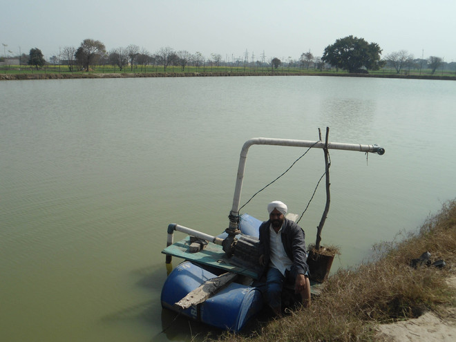 Image result for punjab fish farm