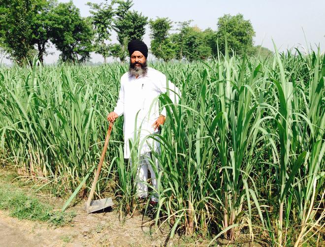 Sangrur man sets example with progressive farming techniques