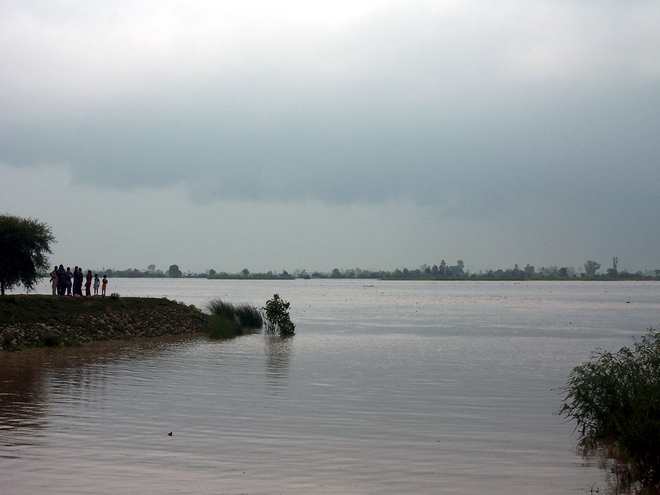 Sutlej swells, crops on 2,000 acres submerged in Moga