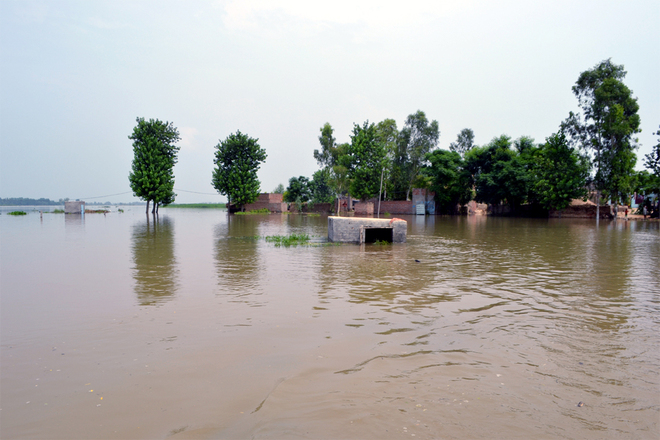 Sutlej swells,  Moga village houses flooded