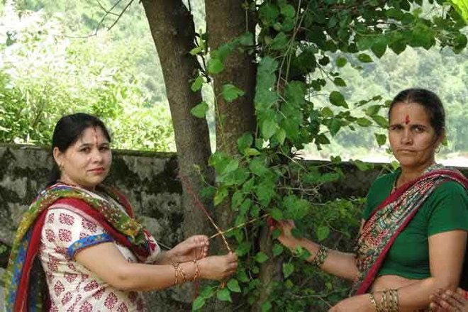 Women tie threads around trees
