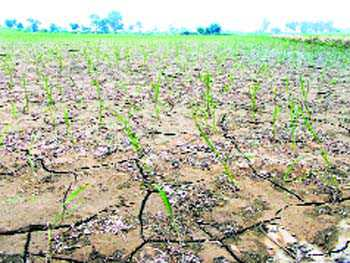 Jhajjar faces drought-like situation