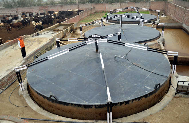 Domestic Biogas Plants A Hit In Villages