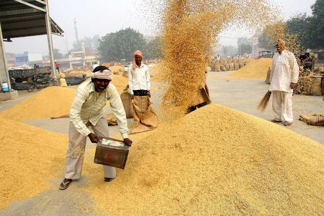 Govt revises moisture content formula for paddy, with riders