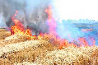 Curb straw burning: SC panel to Punjab, Haryana