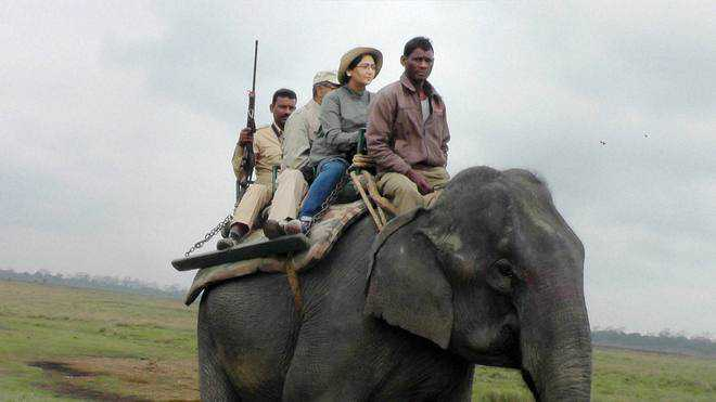 Elephant safari to resume in Rajaji reserve after 9 yrs