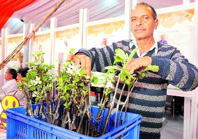 Hariman Sharma With 99 Variety Apple Saplings And Anantnags Mohammad Rafique Ahangar Shows His Multipurpose Axe At The Festival Of Innovation
