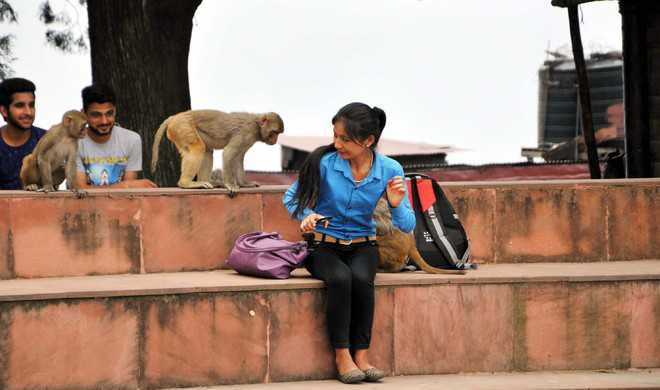 Vermin status for Shimla monkeys challenged in HC