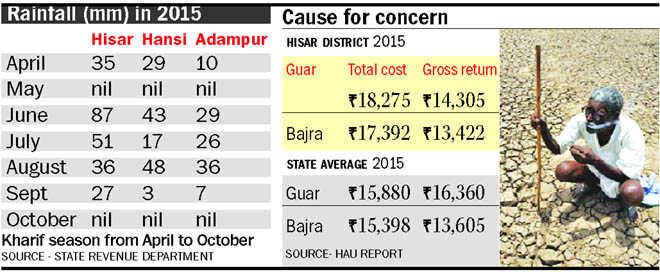 Farmers suffered losses in kharif crops: HAU report