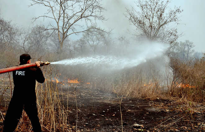 No effective method to assess loss of flora and fauna in forest fires