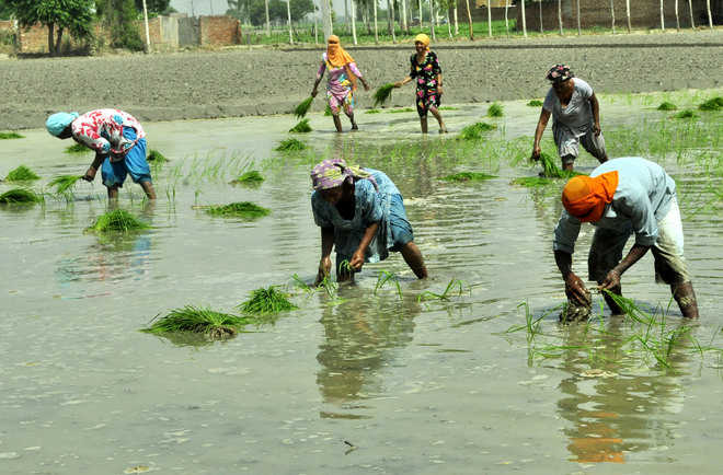 Paddy season begins today, farmers feel labour pangs