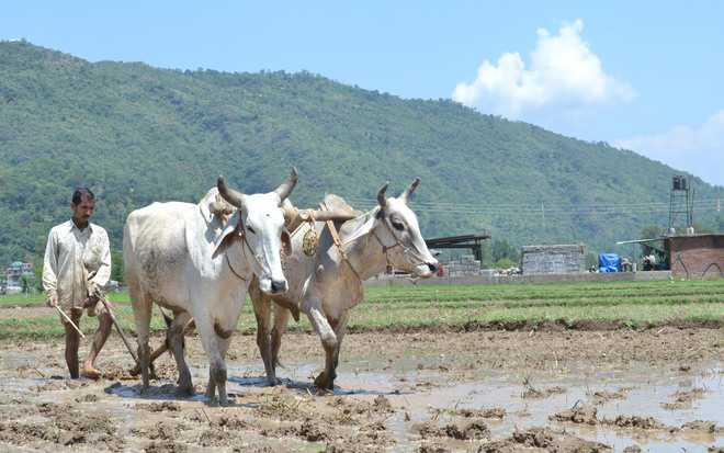 30,000 farmers to learn  drought-adaptive practices