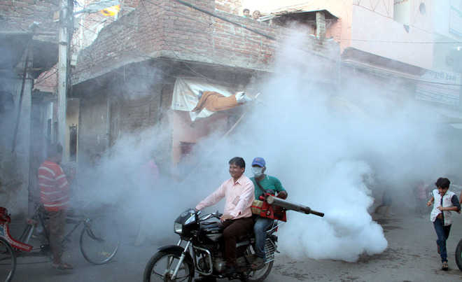 With 5 new cases, dengue count 14