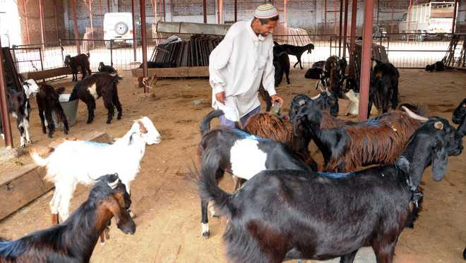 Traders incur losses as sale of goats nosedives in Kashmir