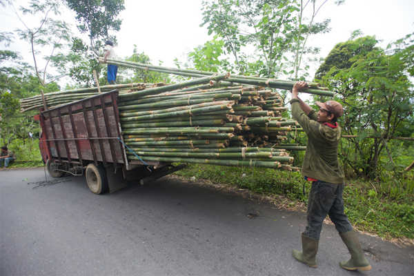 The king's gift of bamboo