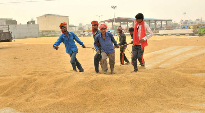 Punjab eyes all-time high paddy purchase